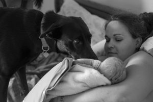 Even dogs like home birth